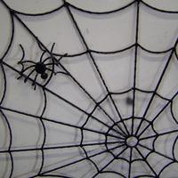 Spinneweb raambeveiging